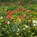 Prendre soin de son jardin au printemps